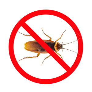 Cock roach control - pest control