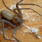pest control san antonio - spiders